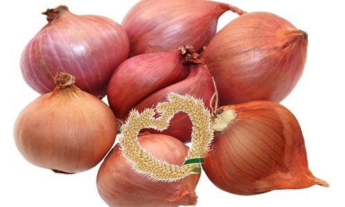 Red Shallot